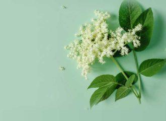 dieta cu flori de soc